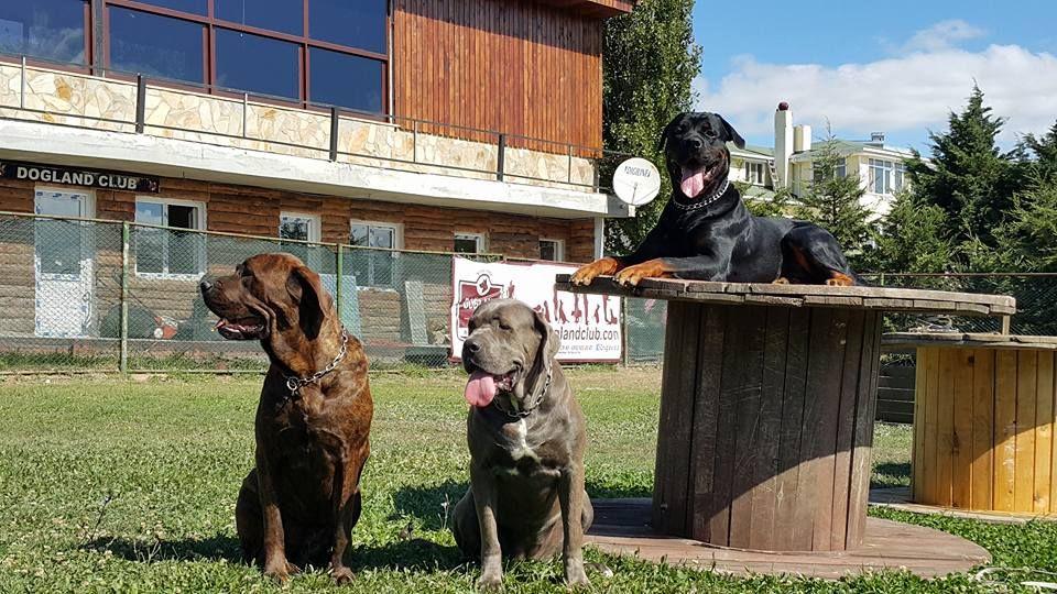 Köpek Görselleri ve Eğitimleri