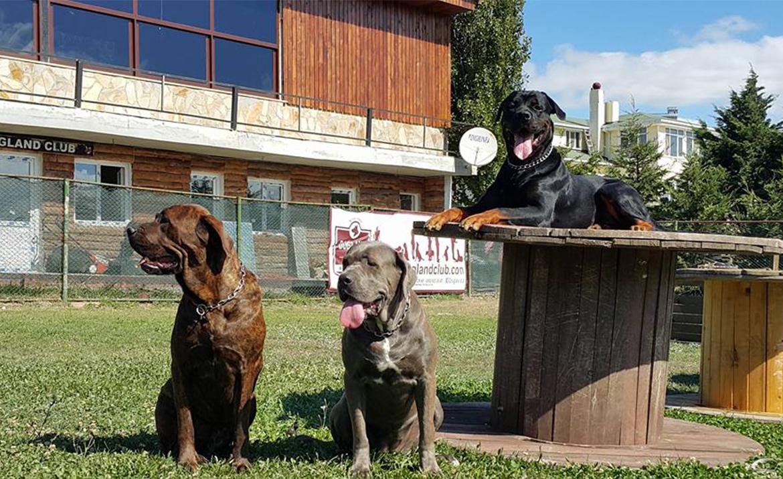 İyi bir köpek eğitimi nasıl olmalı ?