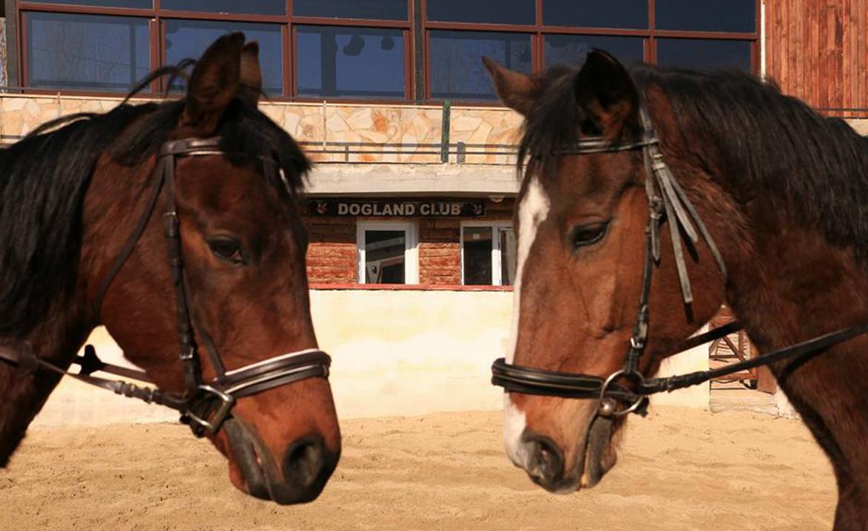 Atlara karşı davranılmalı