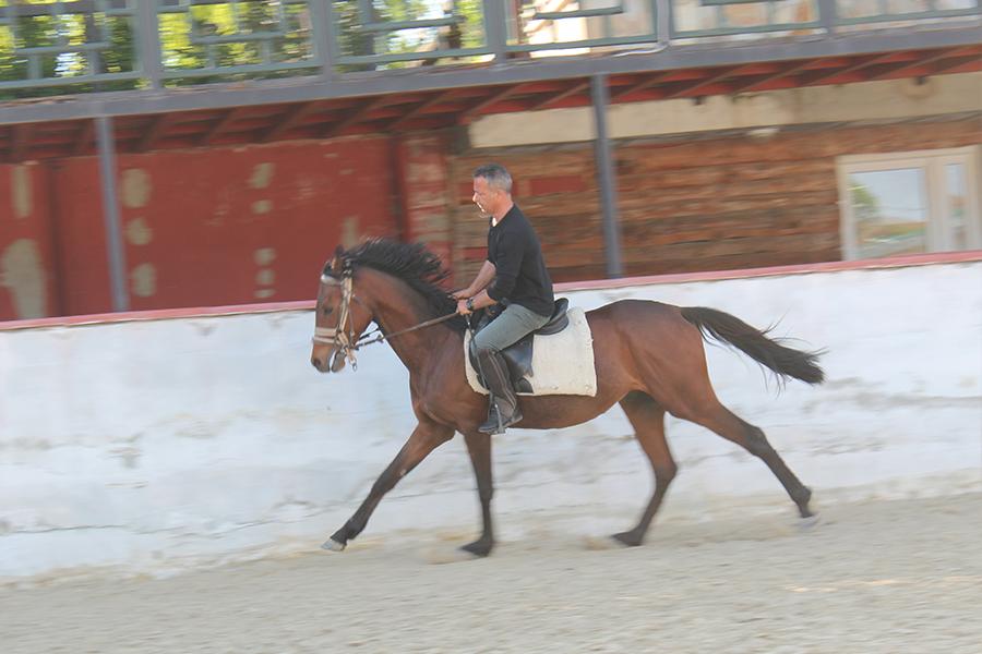 At Çiftliği ve Eğitimi