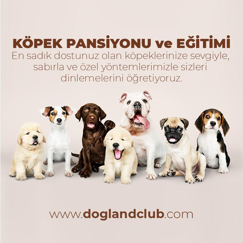 Köpek Eğitimi ve Pansiyon Hizmeti
